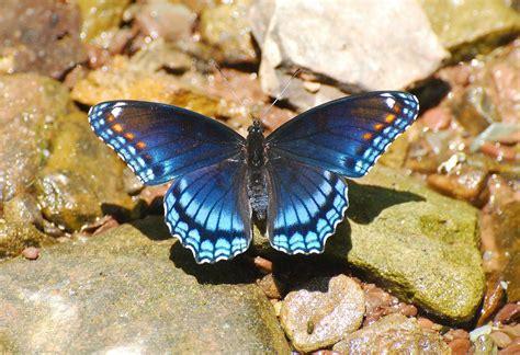 imagenes mariposas de colores colores de las mariposas tornasoladas im 225 genes y fotos
