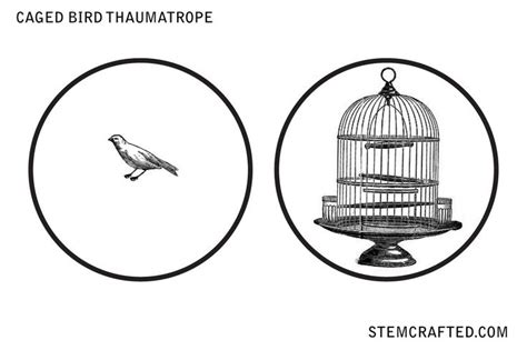 thaumatrope template printable quot caged bird quot thaumatrope disk printable stemcrafted
