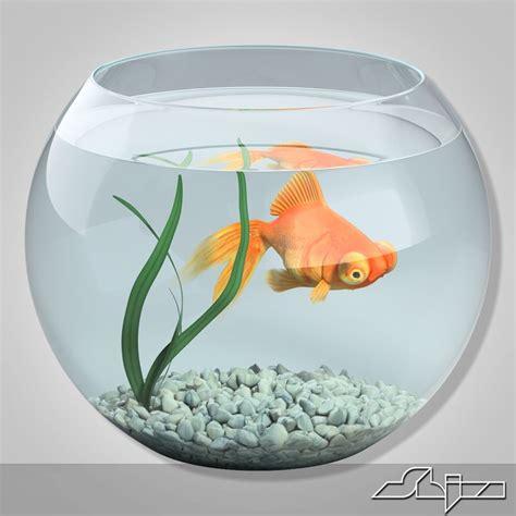 Aquarium Fish Model Cumi 13 Liter 3dsmax aquarium gold fish
