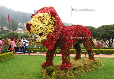ooty rose garden flower show and rose varieties
