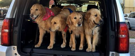 lutheran comfort dogs comfort dogs descend on florida community after deadly