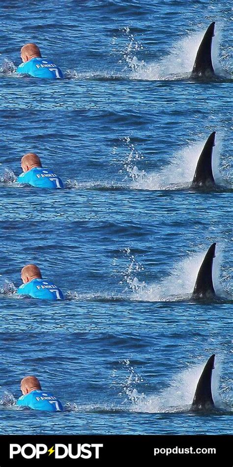 best shark attack 17 best images about and wonderful on