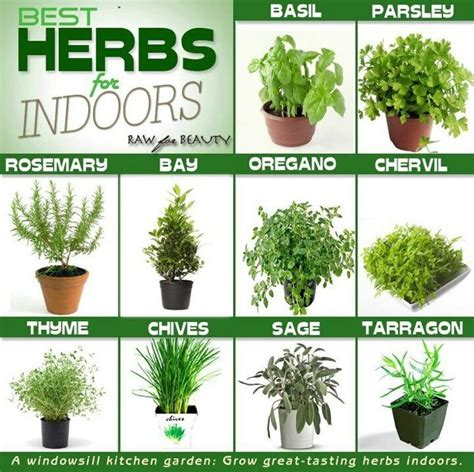 Growing Herbs Inside | growing herbs indoors yard pinterest