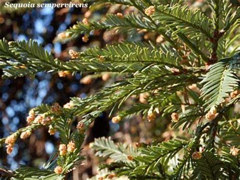 foglie e fiori genova sequoia fiori e fogliefiori e foglie