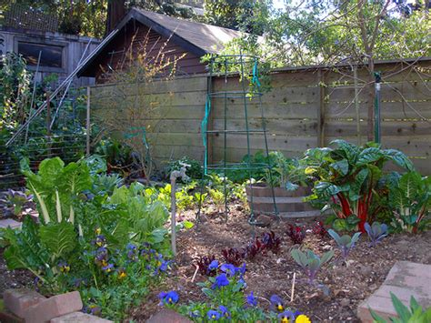 vegetable garden in backyard backyard vegetable garden flickr photo