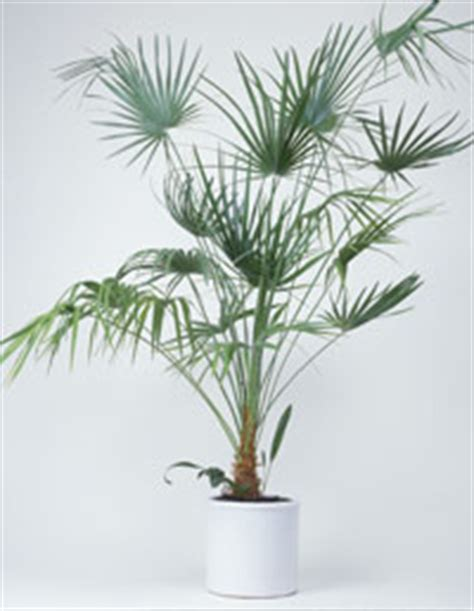 recommended indoor house plants at womansday com common