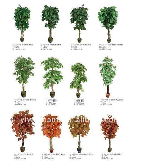 imagenes flores y nombres nombres de plantas de arboles imagui moldes para