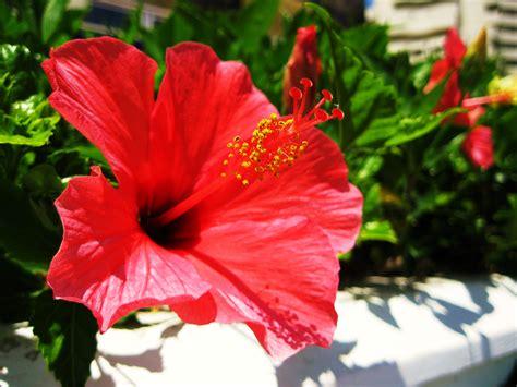 fotos de benalmadena  fountains  flowers days