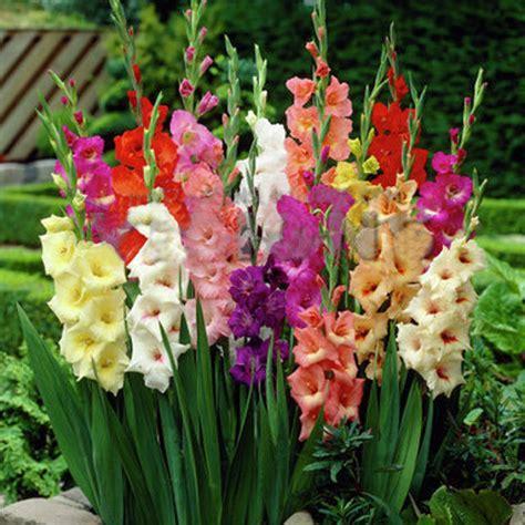 grossista fiori acquista all ingrosso orchidea fiori recisi da