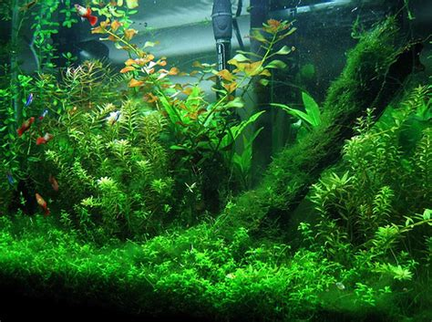 Aquarium Plants 3 the 3 most important things about picking freshwater