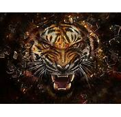 Angry Tiger  Tigers Wallpaper 31737545 Fanpop