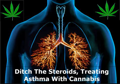 cannabis treats can cannabis treat asthma you may be surprised