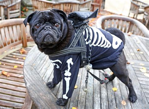 how much money is a pug dogs dress in best to raise money for charity