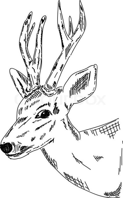 vector deer hand zeichnen auf stock vektor colourbox