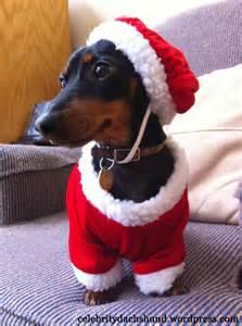 Dachshund Bed My Christmas List Crusoe Celebrity Dachshund