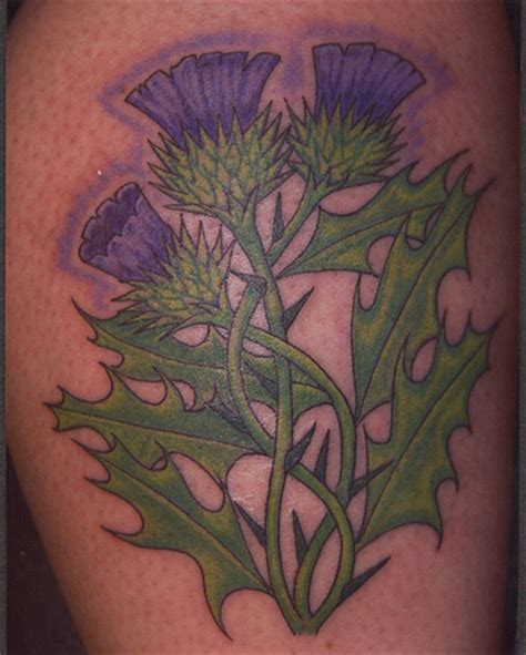 edinburgh tattoo flower of scotland scottish thistle tattoos tattoo lawas