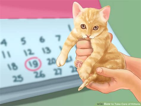 karma big stories of small cats who change our lives books what to do with a kitten while at work cats kittens