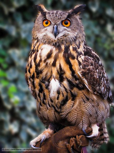 top 28 show me a picture of an owl the rspb browse bird families owls 25 best ideas about