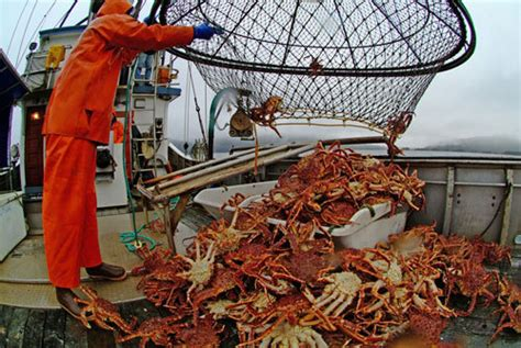 10 cast net alaskan king crab boats