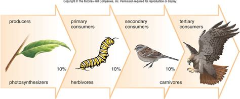 temperate grassland food web www pixshark com images