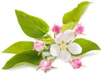 i fiori di bach a cosa servono erboristerie fiori di bach cosa sono e a cosa servono