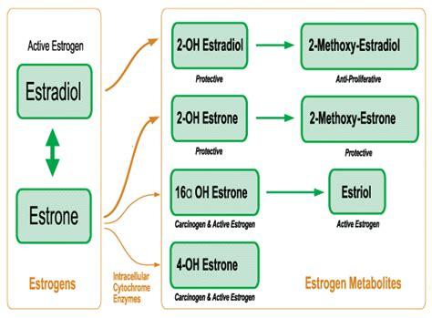 Methylation Side Effects Detoxing Urine by Estrogen Balance And Estrogen Dominance