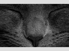 ae80-sleeping-black-cat-zoom-nature-wallpaper Macbook Pro