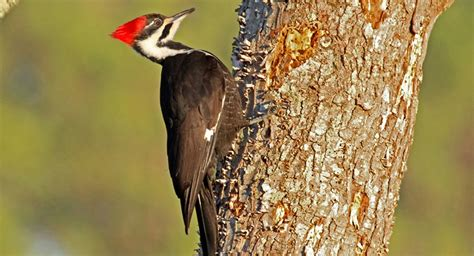 new video series explains why woodpeckers are built to