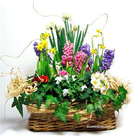 bulbacee da fiore realizzare un cesto fiorito con primule bulbose e viole
