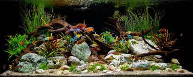driftwood aquascape a classic decorative freshwater aquascape witrh driftwood