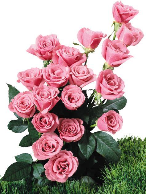 imagenes png flores ramos de flores png imagui