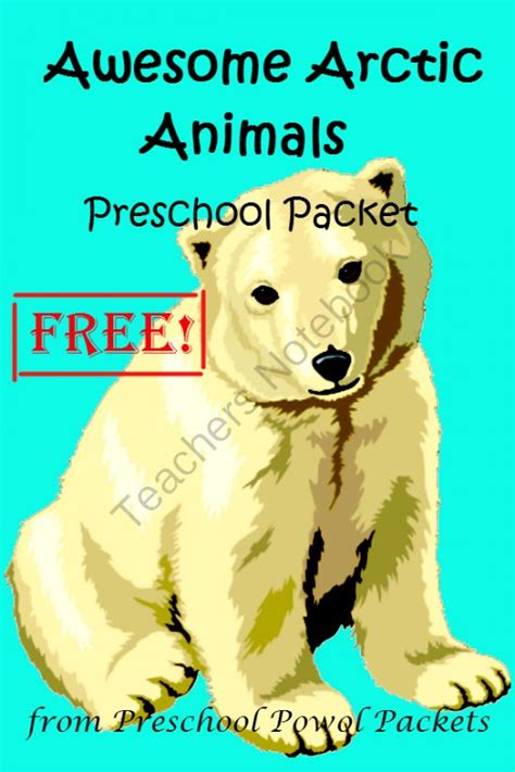 1000 Images About Arctic Animals - 1000 images about arctic and polar for preschool on