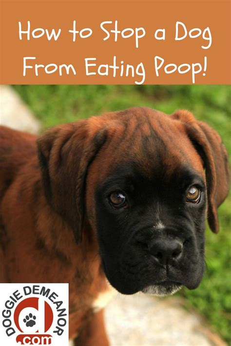 how to stop a dog pooping in the house how to stop dog from eating poop dog animal and doggies