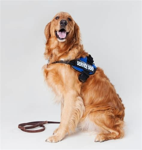 what are service dogs used for pin skin problems on