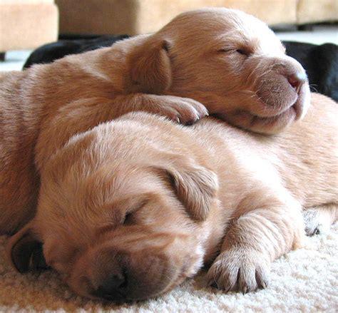 puppies snuggling 2871715306 6f9535cfe6 z jpg 3fzz 3d1