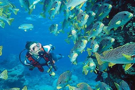 dive holidays scuba diving courses packages holidays