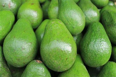 gambar buah buahan segar jenis jenis ciri ciri