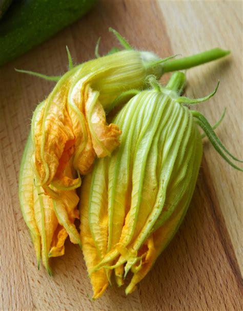 come cucinare i fiori di zucchine i fiori di zucca come pulirli e cucinarli