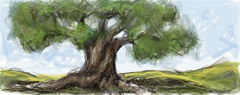 olive tree wallpaper ancient olive tree by aryundomiel on deviantart