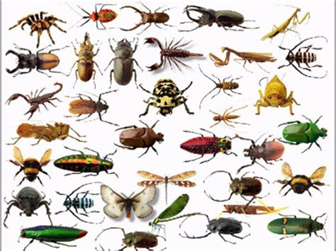 Cape Cod Pest Control - insect control cape town 187 tel 081 599 8011 187 cape town