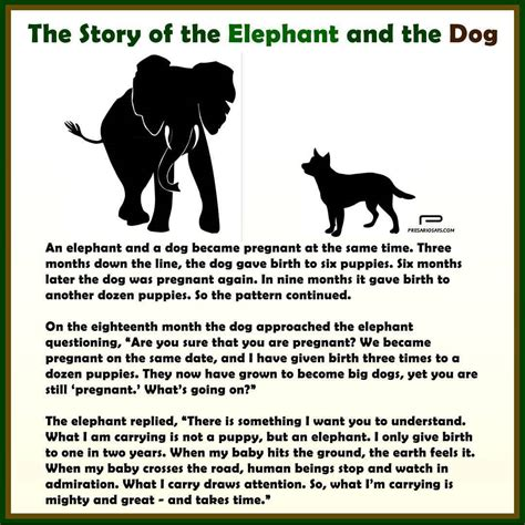 The Story Of Dogs the story of the elephant and the an