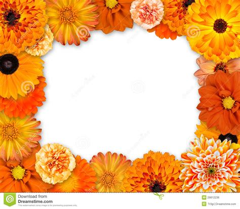 flower frame with orange flowers on white royalty free