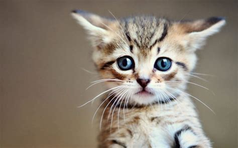 uber delivers cute kittens  stressed workers  national