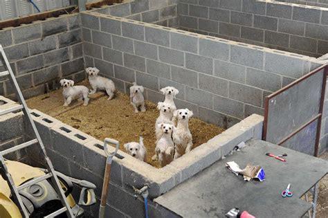 puppy farm the story c a r i a d the caign to end puppy farming