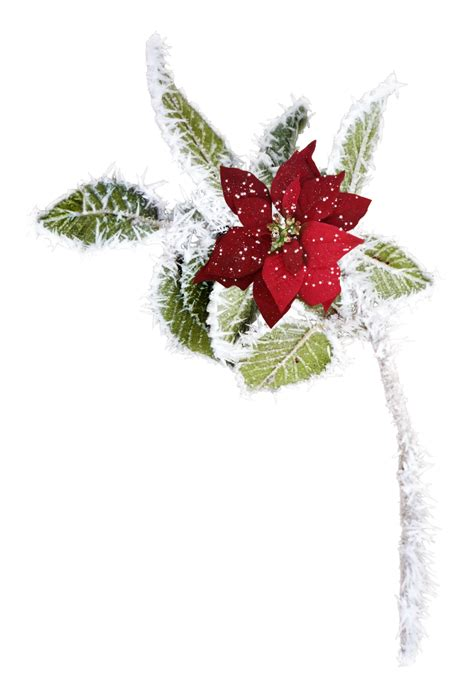 imagenes navideñas en png im 225 genes frases y reflexiones nochebuenas navide 241 as en png