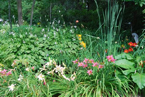 backyard gardens daylily garden maitland garden of hope