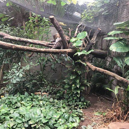 Zoologischer Garten Leipzig by Zoologischer Garten Leipzig Aktuelle 2018 Lohnt Es Sich