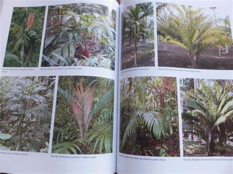 encyclopedia of cultivated palms book review the encyclopedia of cultivated palms paperblog