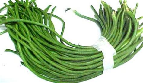 String Beans Clip - bodi caribbean dictionary