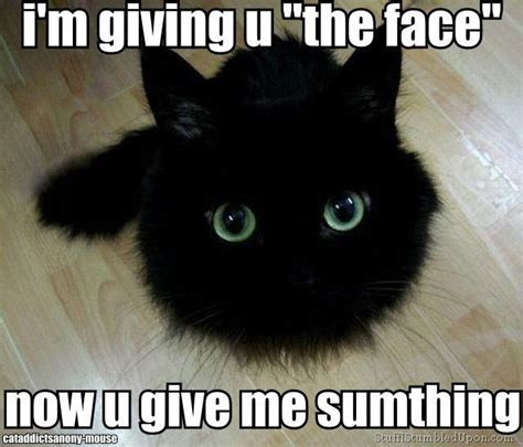 Top I Ll Even My Cat With You New top 15 cat memes that ultimately the it s